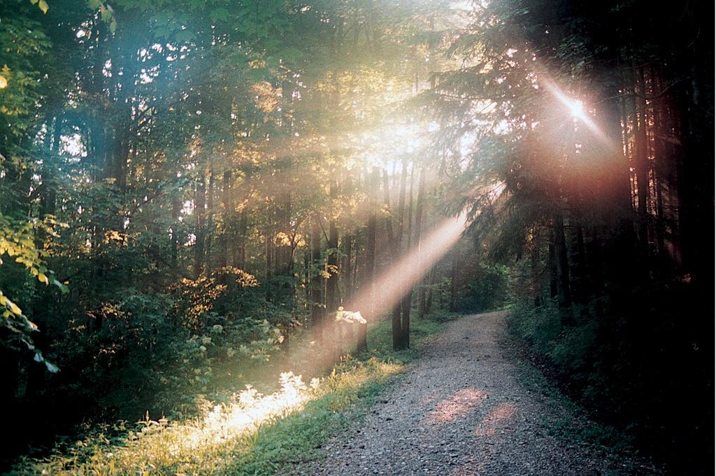 Wenn im Herbst die Sonne schon tief steht kann man ein bezauberndes Lichterspiel beobachten (Andreas Klausmann)