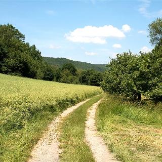 Durch Wiesen führt unser Weg am Ufer der fränkischen Saale entlang.
