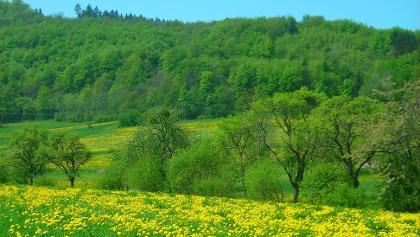 Blick über die blühenden Wiesen bei Beuren.