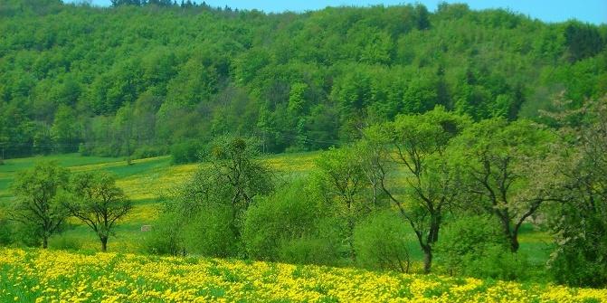 Singletreff odenwald