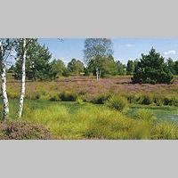 Das Naturschutzgebiet Wurzacher Ried bietet Lebensraum für seltene Tier- und Pflanzenarten.
