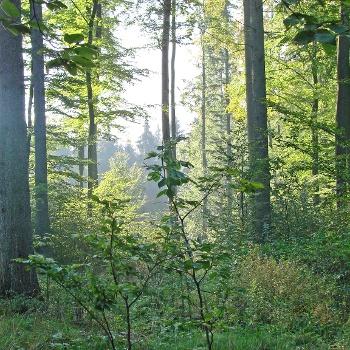 Bedingungen Schwarzwald