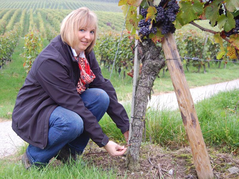 Gudrun Ungerer vom Weingut Ungerer in Pfedelbach vor einem ihrer Weinstöcke   - © Quelle: Michaela Christ