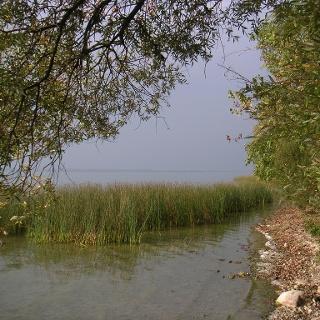 Der See ist von Schilfgürteln umgeben.