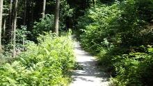 Rur-Olef-Route/Etappe 2: Hellenthal - Einruhr