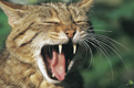 Wildkatzen Wandererlebnis
