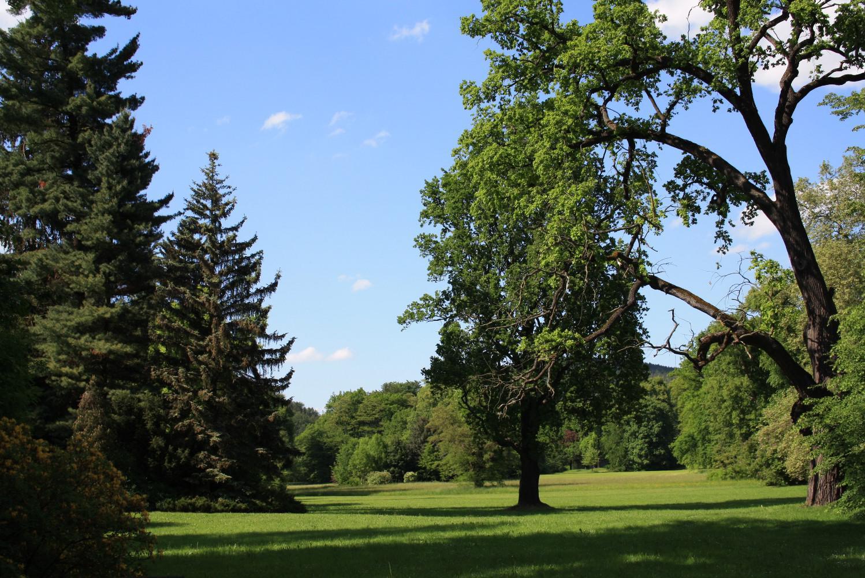Der Greizer Park