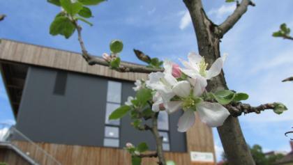 DAV Kletterzentrum Berlin: Die erste Apfelblühte