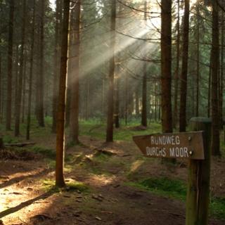 Im Wald beim Moor herrscht eine geheimnisvolle Stimmung.