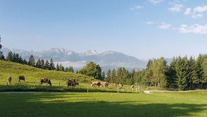 Mit herrlichem Alpenpanorama joggen wir über die grünen Wiesen des Alpenvorlands bei Waltenhofen-Rauns.