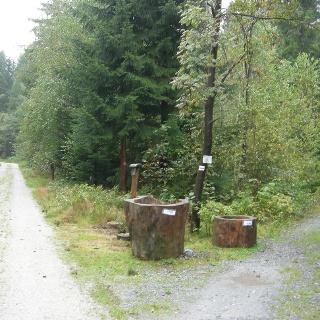 Walderlebnis und Heilklima erwartet uns auf gut begehbaren Wegen.