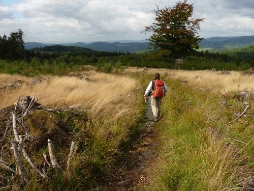 Albaumer Klippen: Rauschende Wälder und wilde Klippen