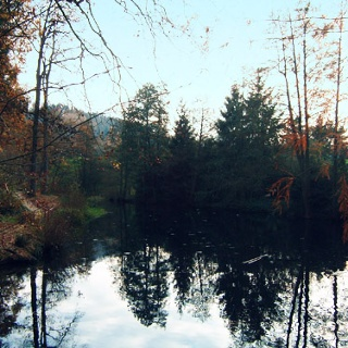 Der Waldsee in Oberachern.