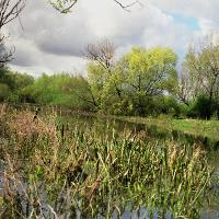 Altrheinarm in Grietherbusch