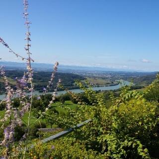 Panoramablick von Maria Taferl auf Donau und Nibelungengau