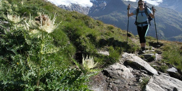 Aufstieg zum Türmljoch, links das Rainerhorn