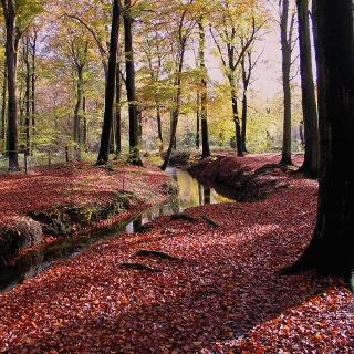 Es geht durch den schönen Wald von Behringersmühle nach Moritz.
