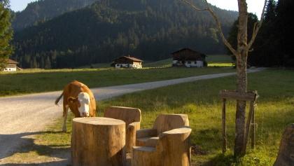 Der originelle Rastplatz weckt auch das Interesse der Kühe.