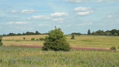 Der Rhöner Magerrasen ist Naturschutzgebiet und bietet einmalige Pflanzen- und Tierwelt.