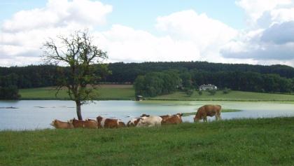 Der Egglburger See.