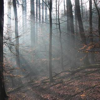 Die Morgensonne im Buchenwald