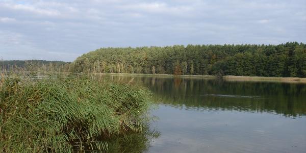 Der Roofensee gehört zum Naturschutzgebiet Stechlin.