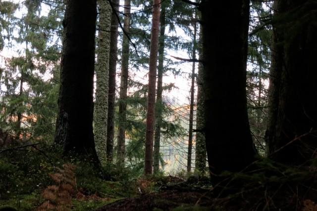 Waldstimmung am Weg