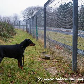 Am Adenauer Forst