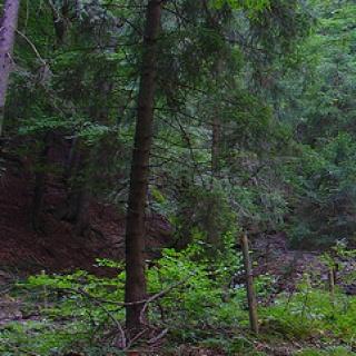 Durch schönen Wald geht es zum Markgrafenberg.