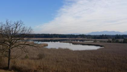 Der Gartensee, schon am Ortsrand von Seeshaupt gelegen