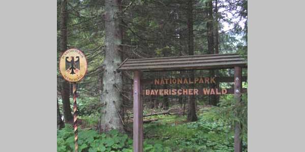 Auf in den Nationalpark Bayerischer Wald!