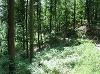 ....stille Waldwege  - @ Autor: Heinz Obinger  - © Quelle: Hohenlohe + Schwäbisch Hall Tourismus e.V.