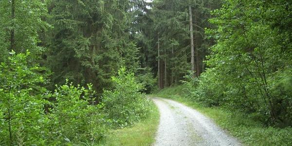Auf Forstwegen geht es sanft bergan durch den Wald.