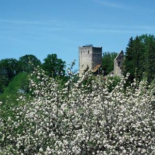 Hinter Büschen versteckt sich die Burgruine.