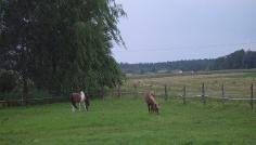 Ein Blick auf die Pferdekoppel.
