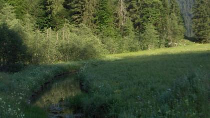 An der Röthelmoosalm fließt ein Bach.