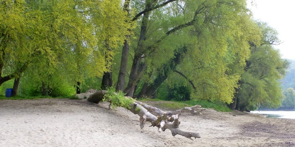 Rheinspitz