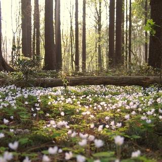 Im Naturpark Barnim finden wir teilweise noch unberührte Natur.