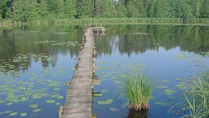 Wer sich über den Steg traut, sitzt an dessen Ende auf einer Bank mitten auf dem Neusee.