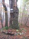 Naturdenkmal Kreuzbuche