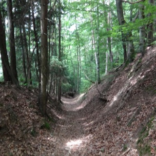 Waldweg nach Neunburg