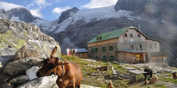 Selbst die Ziegen fühlen sich bei der Greizer Hütte wohl.