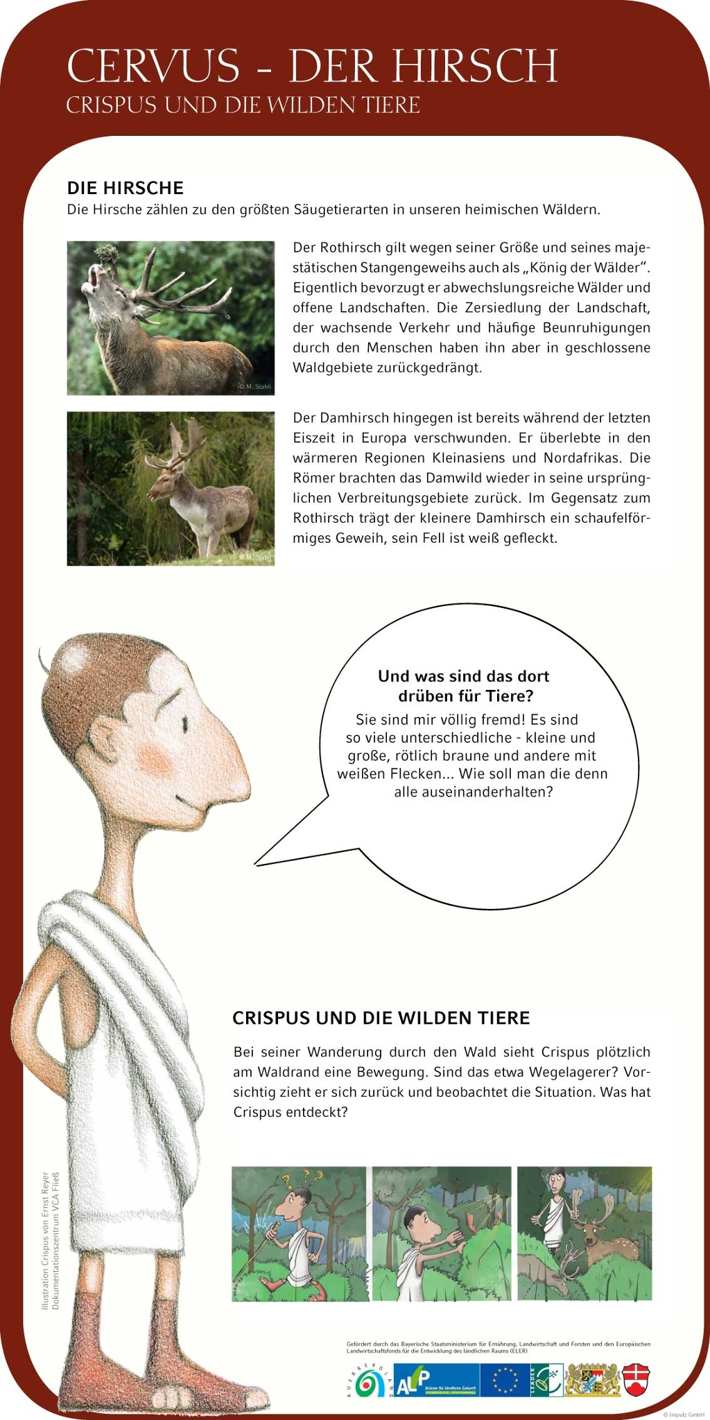 Cervus - Der Hirsch ()