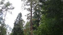 Wanderbare Waldeslust