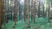 Im schönen Streitwald