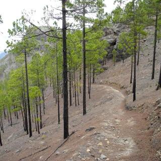Der Abstieg durch den Pinienwald