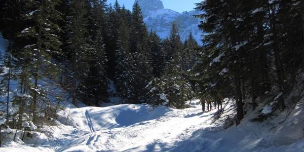 Forststraße nach dem Ebnerlehen