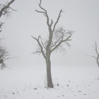Nebel bei der Ketzbergerhöhe