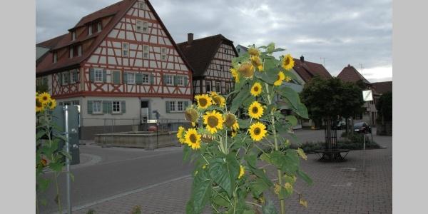 Rathaus in Oedheim