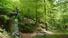 NATURA Tipp 1 – Buchenwälder um Stolberg, Rund um den Zwißelsberg